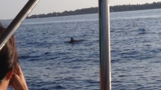 Shangri-La's Villingili Resort and Spa Maldives : A playful dolphine along side of our boat, Feb 16, 2014