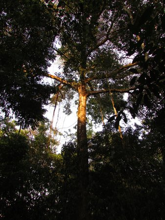 Osa Green Travel: La jungle à son meilleur