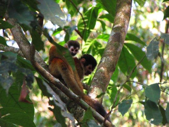 Osa Green Travel: bébé singe avec sa maman