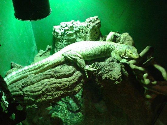 The Reptile Experience: Monitor Lizard