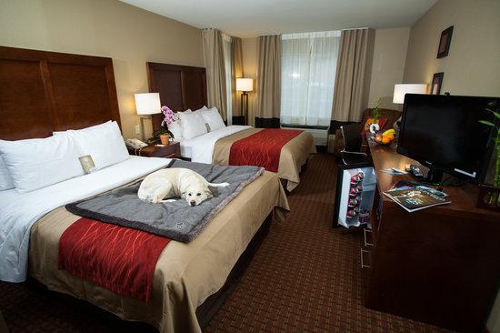 Comfort Inn & Suites Carbondale: Pet Friendly Two Queen Room