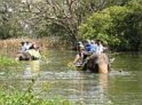 Habarana Inn: Wild Safari