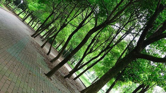 "Xiangxiang, Kina: a city ""forest."""
