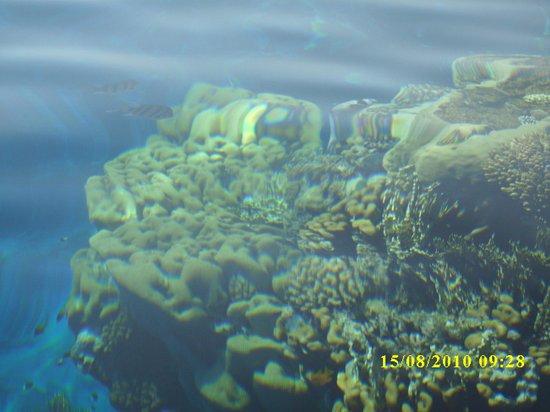 Queen Sharm Resort: Barriera corallina