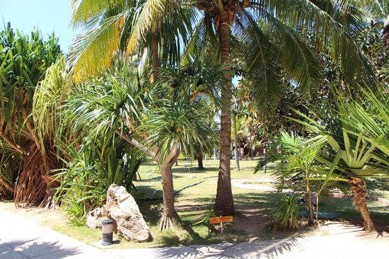 BelleVue Playa Caleta: Зеленая территория