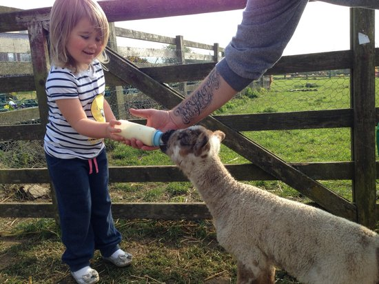 The Grainary: Feeding a lamb! Made her day