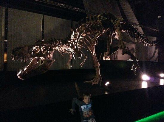Territorio Dinópolis: Museo paleontológico