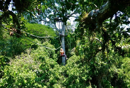 Amazonia Expeditionsu0027 Tahuayo Lodge Canopy Zipline & Canopy Zipline - Picture of Amazonia Expeditionsu0027 Tahuayo Lodge ...