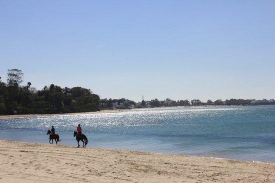 The Sindbad: La Playa