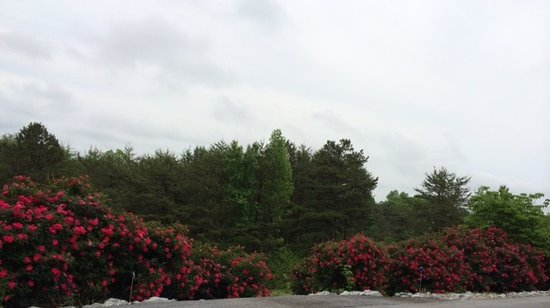 Three Pines View: Wall of Roses
