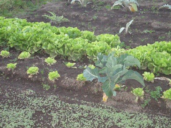 Agriturismo Vivinatura : Agri