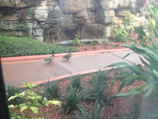 Radisson Resort Orlando-Celebration: room view #1116