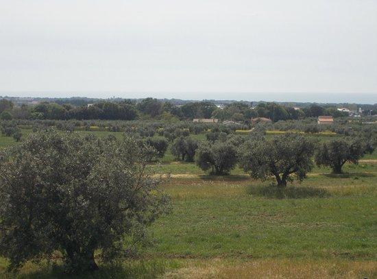 San Gregorio: Vista