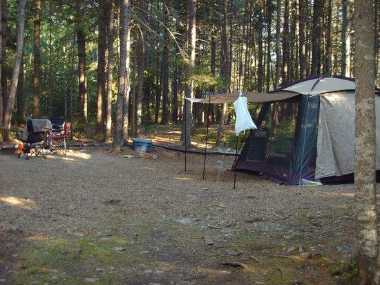 Mount Desert Campground: site