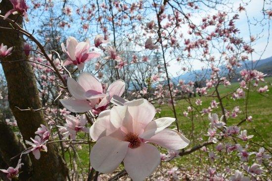Glen Gordon Manor: Spring Blooms