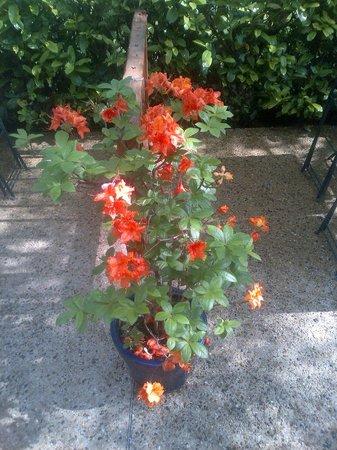 Pitch and Putt : les plantes s'y plaisent et florissent à foison