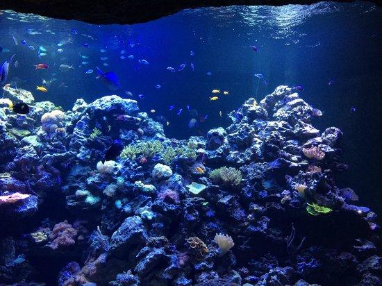 Glow Jelly Picture Of Virginia Aquarium Marine Science