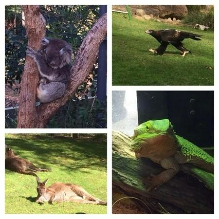 Healesville Sanctuary: A fantastic day out