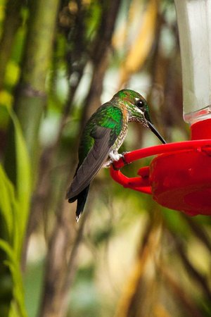 La Paz Waterfall Gardens: Took pre-wedding pictures feeding the hummingbirds!