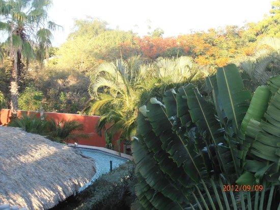 La Palmeraie: pool view panoramic