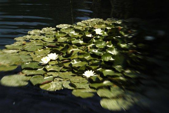 Naturwellness Hotel Moorquell: Wasserrosen im eigenen See