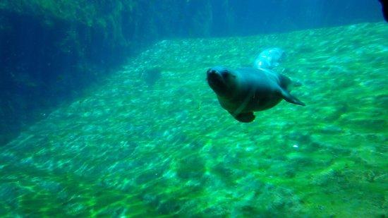 Oceanografic: qs foca è stata super ..muy simpatica