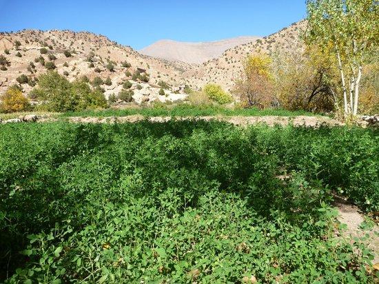 Sahara Atlas Tours -Day Tours : Growing crops in the Mgoun Valley with Sahara Atlas Tours.