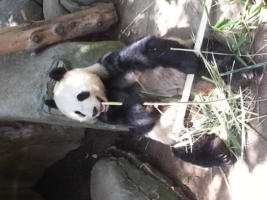 San Diego Zoo: Lunch with the Panda