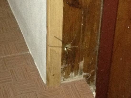 Tohko Beach Resort: spiders in our bungalows