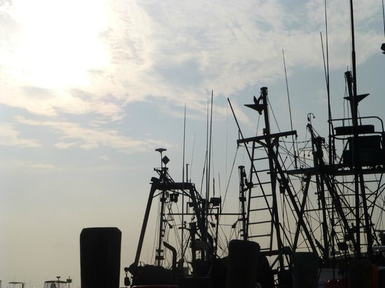 Larsen's Fish Market: Great views of the harbor and boats coming in.
