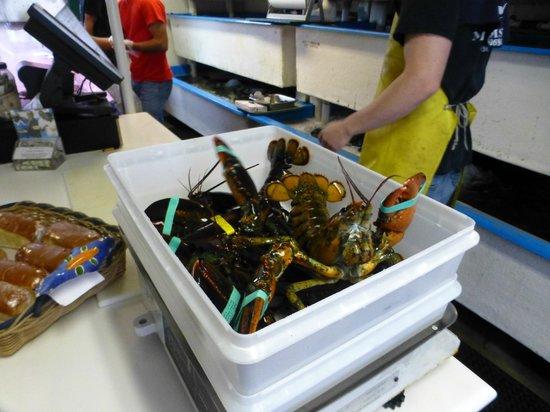 Larsen's Fish Market: Big boys on the scale...