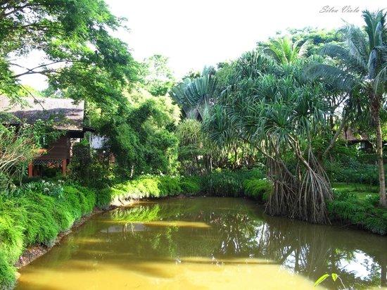 Sepilok Nature Resort: Laghetto