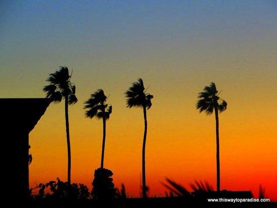 Riad Camilia: View of trees