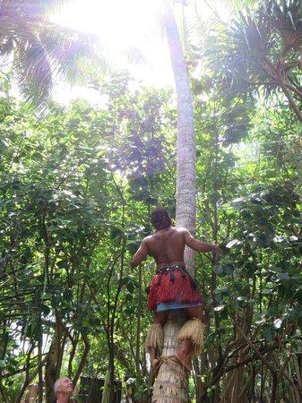 Koka Lagoon Cruises: Coconut Tree Climbing