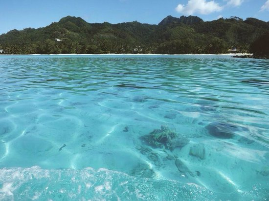Koka Lagoon Cruises: The place where we snorkeled!