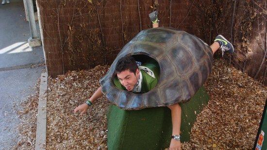 Alpenzoo: Έγινα χελώνα!