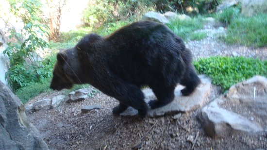 Alpenzoo: Αρκούδα αποφυλακισμένη, δυστυχώς είχε ψυχολογικά