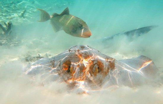 Eriyadu Island Resort : Парочка