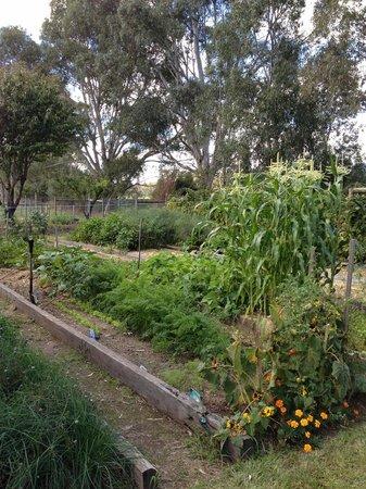 Dal Zotto Trattoria: dal zotto vegetable garden