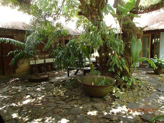 The Pink Plantation House: Kitchen Garden