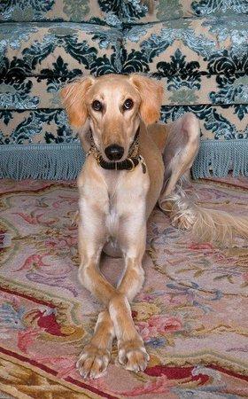 Kristiania Lech: Kristiania Dog