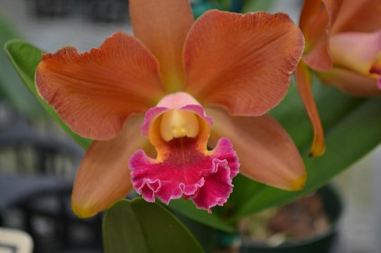 Akatsuka Orchid Gardens: One of many varieties of orchids
