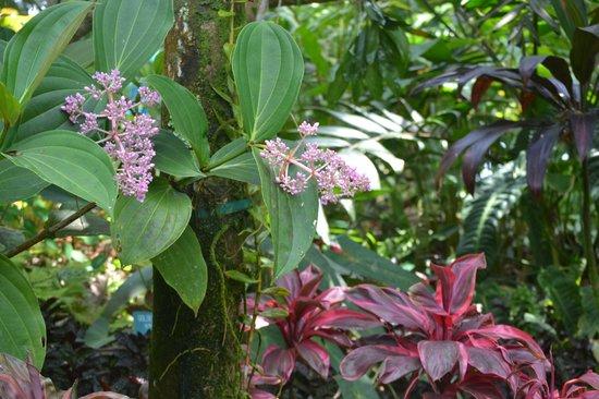 Hawaii Tropical Botanical Garden: Garden foliage