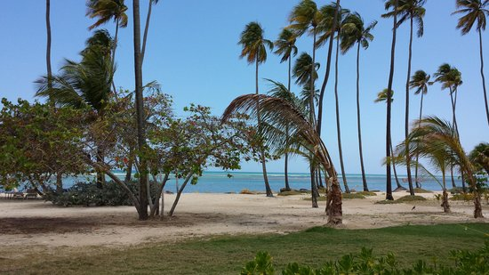 Gran Melia Golf Resort Puerto Rico : View from Room Patio