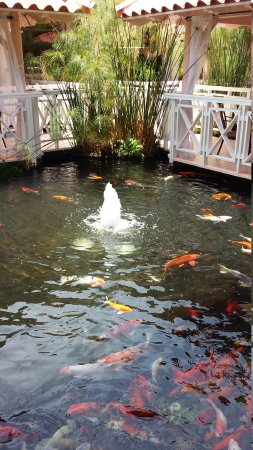 Melia Coco Beach: Koi Pond on Resort Grounds