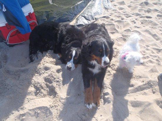 Alouette Beach Resort: Bouvier de plage