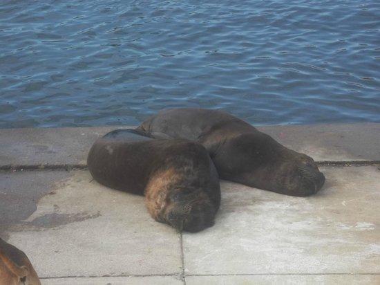 Puerto de Mar del Plata : lobos en banquina