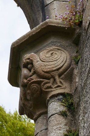 Boyle Abbey: peacock... one of many details shown by guide Eugene