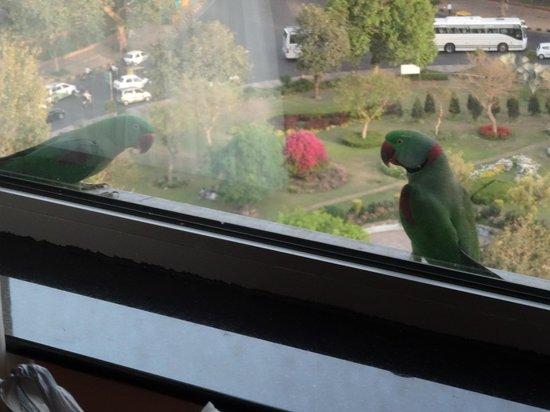 Shangri-La's Eros Hotel : Parokeet sitting on our window ledge