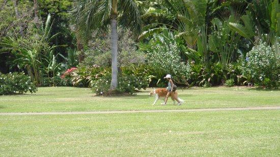Fort DeRussy Beach Park: promenade de grand chien !